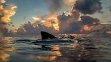 Lemon shark sunrise in Bahamas