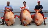 3 Fishs