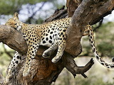 Wild-animals-5