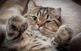 kitten Collection5