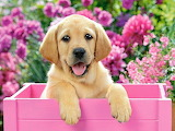 ☺♥ Adorable puppy...