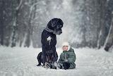Dog watching baby