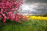 Spring Tree in Meadow