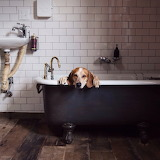 Maddie the Coonhound-bath time