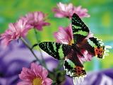 Mariposa en colorida