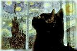 Van Gogh Black Cat
