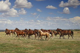 'Horse Jingle in Rural Texas' c 2018 by CarolMHighsmith