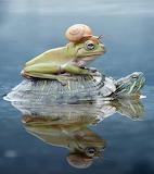 Snail frog turtle