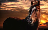 Brown Horse at Sunset