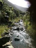 Warawara forest