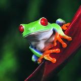 Cute Frog...