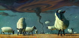 Tornado Sheep