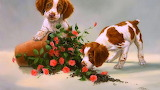 Puppies with Roses