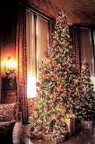 Christmas Tree Biltmore Estate