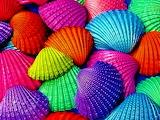 ☺♥ Shells...