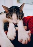 Cat Side Eye