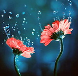 Flores600