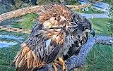 E15- Juvie SWFLorida nest