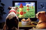 DogsWatchingTV