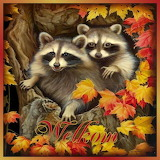 Bosdieren raccoons