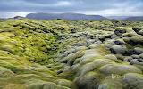 Eldhraun lava field. Laki. Iceland
