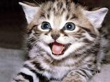 Cica csodalkozik
