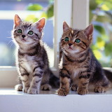 ♥ Two Kittens...