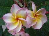 Flor exótica25