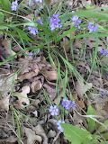 tiny purple flowers in the park