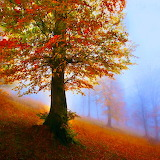 Colors in the Mist...