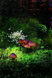 Fungi and moss