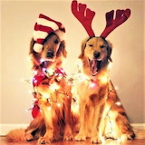 #Deck the Halls with Dogs Who Folly