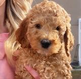 Floofy Pup