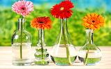 Flowers in Bottles...