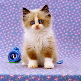 ☺Little Persian...