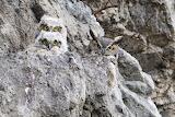 "Birds tumblr americasgreatoutdoors ""Great Horned Owls"" ""Photo. M"