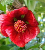 Flores602