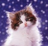 ☺Fluffy Kitten...