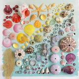 Things Organized Neatly - Rainbow Shells