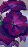 Color Purple.