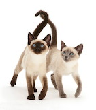 ☺We Are Siamese If You Please...