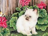 03, Kittens Calender 2007, Jane Maday