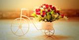 Roses Bike