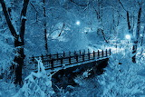 L'incanto della neve a Central Park