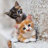 Curious kittens...
