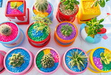 Cactuses in Colorful Pots