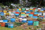 beehives in Crete