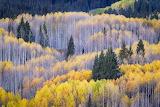 2014-Aspens-3-Colorado-Sarah-Marino-1000px