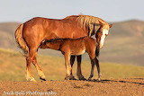 Mare and foal at McCullough Peaks wild horse range in Wyoming.