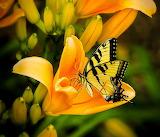 🦋Beautiful Butterfly...